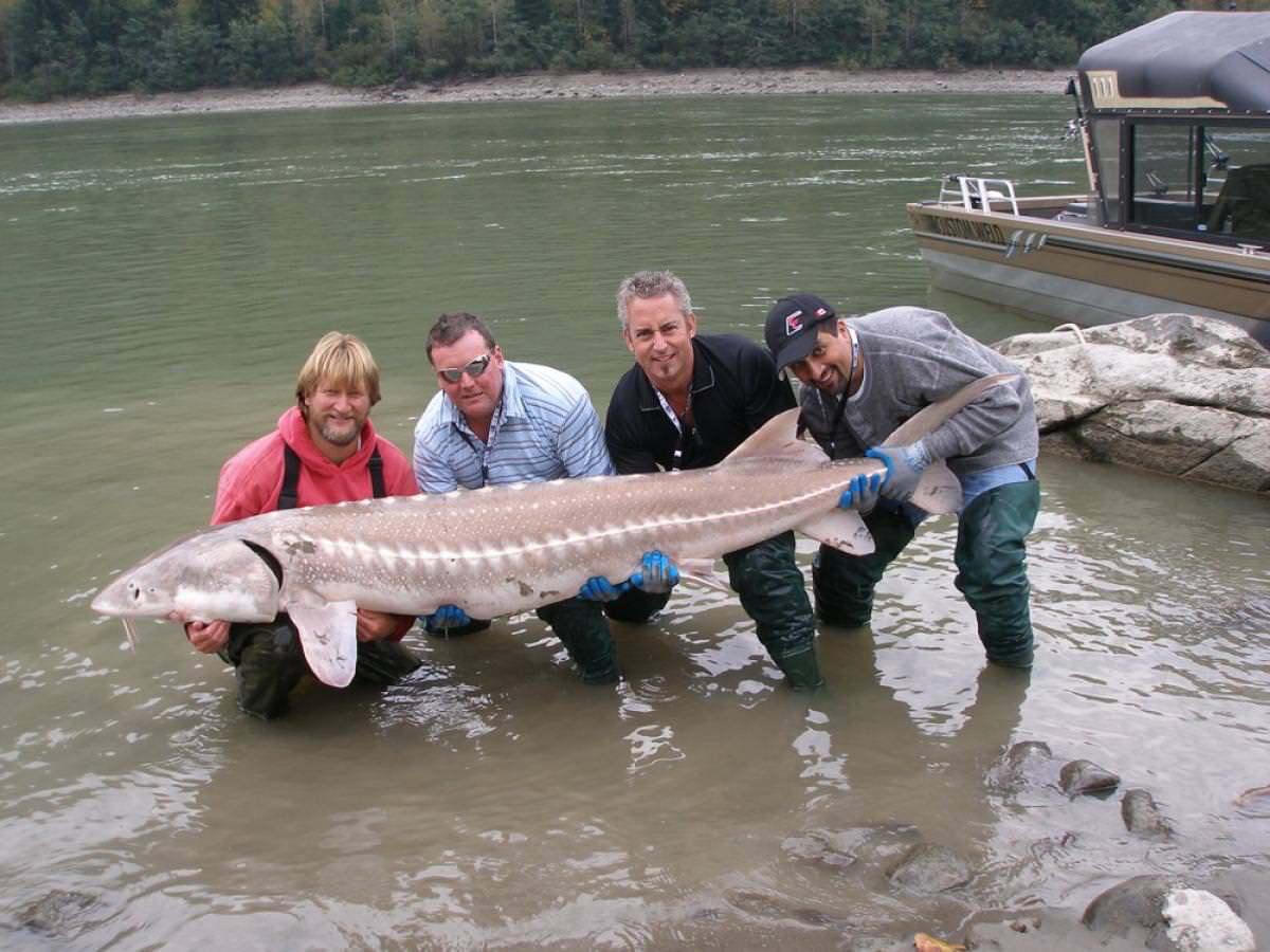 Рыбалка на белугу видео